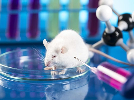 ARE ANIMAL TESTING AND ANIMAL EXPERIMENT ETHICAL?